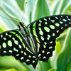 Up to 47% Off Admission to Insectarium and Butterfly Pavilion