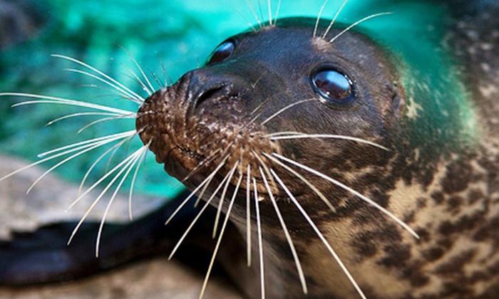 Aquarium of Niagara - East Side: $25 for a One-Year Family Membership to Aquarium of Niagara ($50 Value)