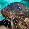 Aquarium of Niagara – Half Off Family Membership