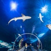 Up to 24% Off Admission to Aquarium of the Bay