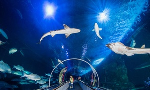 Up to 24% Off Admission to Aquarium of the Bay at Aquarium of the Bay, plus 6.0% Cash Back from Ebates.