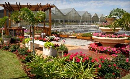 Knox Nursery Inc.: 1 Flat of SunPatiens - Knox Nursery Inc. in Winter Garden