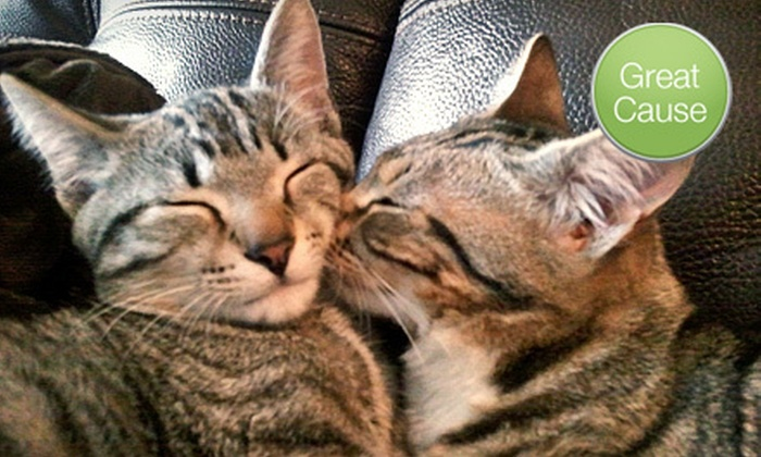 Feral Cat Program of Georgia - Atlanta: $10 Donation to Help Rescue Feral Cats