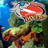 65% Off Scuba Diving