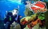 Squalo Divers - North Miami Beach: $69 for One Pool Dive Lesson and Two Ocean Dives at Squalo Divers