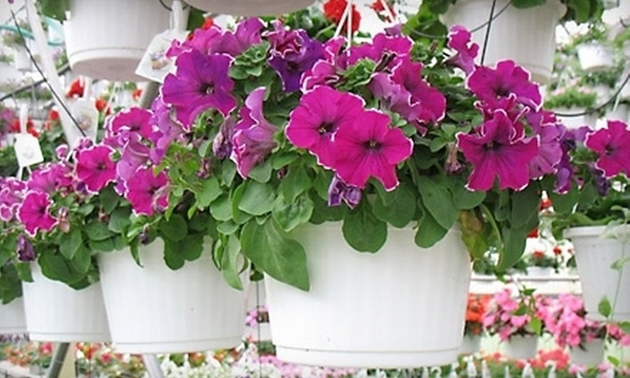Huizenga Brothers Greenhouses and Garden Center - Wyoming: $10 for Two 10-Inch Hanging Plant Baskets at Huizenga Brothers Greenhouses and Garden Center ($21.98 Value)