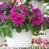 $10 for Two Hanging Plant Baskets