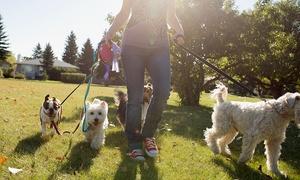 Kar-Group: Kurs online z certyfikatem: Opiekun zwierząt domowych za 79 zł z firmą Kar-Group