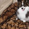 Faux-Mink Fur Pet Beds