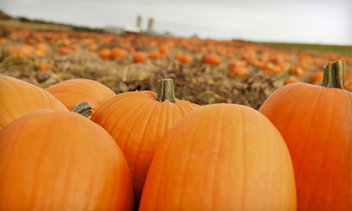 Chester's Party Barn & Farm - Piedmont: $15 for a Pumpkin-Patch Outing for Four at Chester's Party Barn & Farm in Piedmont ($30.52 Value)