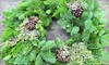 The Exotic Green Garden - Thousand Oaks: $25 for a 16-Inch Prearranged Holiday Wreath with Customizable Bow from The Exotic Green Garden ($50 Value)