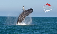 Three-Hour Whale-Watching Cruise for Child ($15) or Adult ($32) with Dolphin Watch Cruises, Huskisson (Up to $65 Value)