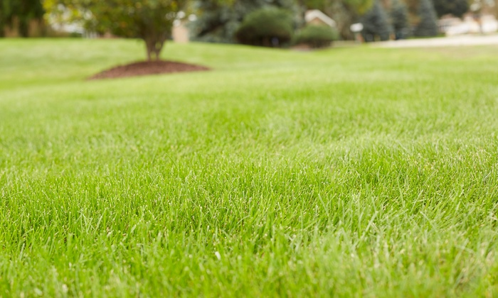 Greenlawns of NY - Long Island: Core Aeration and Lawn Feeding or Sprinkler Winterization from Greenlawns of NY (Up to 50% Off)