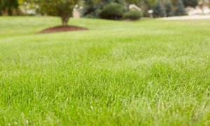 Weed Man: Full Weed-Control and Crabgrass Treatment with Optional Fertilizer Treatment from Weed Man (Up to 82%Off)