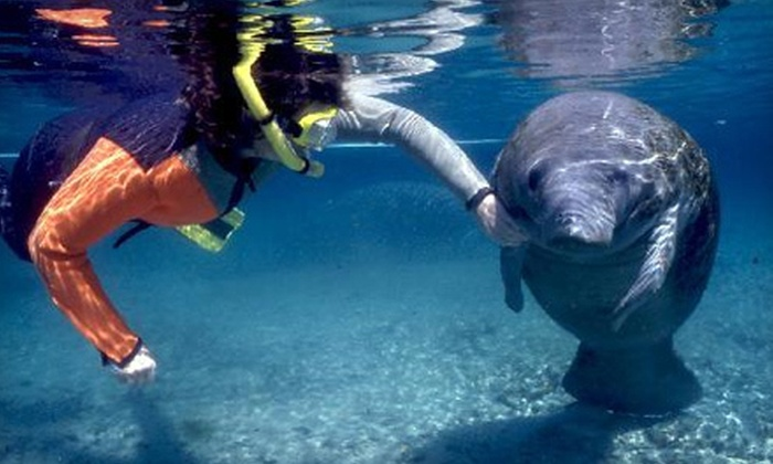 Native Vacations - Crystal River: $25 for a Swim-with-Manatees Tour Package with Equipment Rental from Native Vacations in Crystal River ($55 Value)
