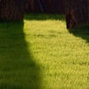 Half Off Lawn Services from Emerald Lawns