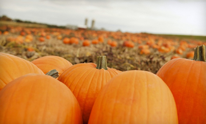 Pumpkin Village - Flower Mound: $8 for 20 Game and Ride Tickets at Pumpkin Village in Flower Mound ($20 Value)