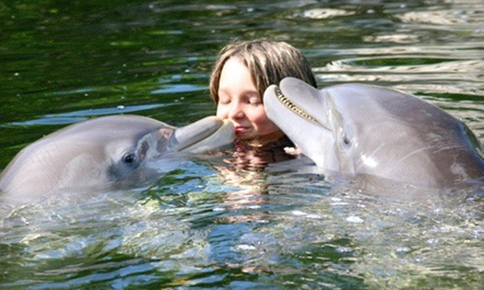 Florida Dolphin Tours - Orlando: South Beach or Key Largo Getaway for Two from Florida Dolphin Tours