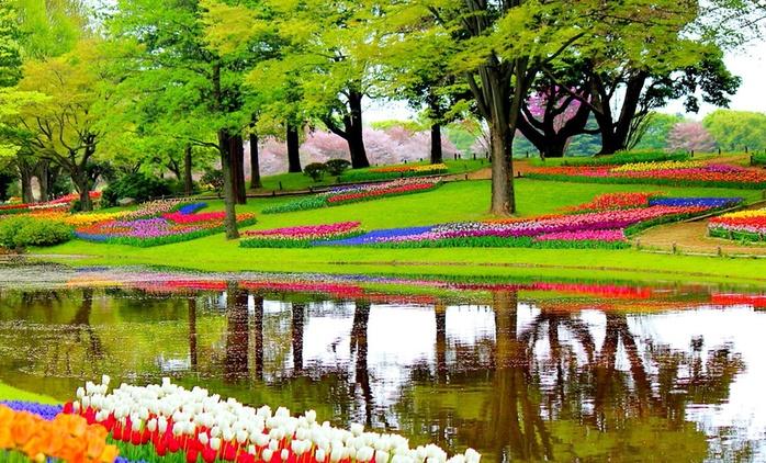 Holandia: 3- lub 4-dniowa wycieczka na Paradę Kwiatową dla 1 os., transport autokarem, opcjonalnie nocleg i więcej