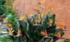 Set paradijsvogels-planten in pot