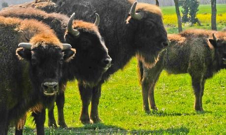 Visita guiada a Safari Ibérico para adultos y niños con aperitivo de bienvenida desde 17 €