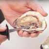 53% Off Oysters from The Lobster Man