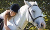 Great Lakes Equestrian Center - Holland: $22 for a 30-Minute Private Horseback-Riding Lesson at Great Lakes Equestrian Center ($45 Value)