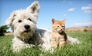Peachtree Animal Clinic: $12 for a Feline or Canine Rabies Vaccination at Peachtree Animal Clinic ($29 Value)