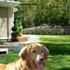 Outdoor Anti-Barking Device