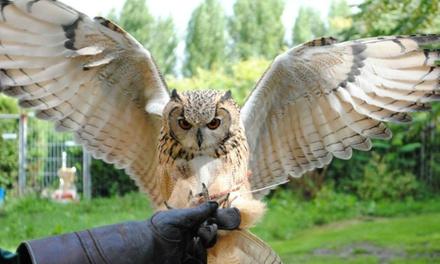 Maak van dichtbij kennis met roofvogels en uilen in een workshop van Vogelfreak Vogeldemonstraties