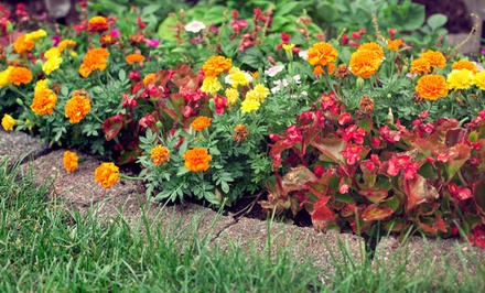 Plants or Landscaping Services from Bloom Nursery (Up to 63% Off)