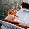 Up to 52% Off Beer-Tasting Cruise in Long Beach