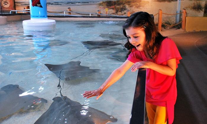 The Florida Aquarium - Downtown Tampa: Visit for Two or Four to The Florida Aquarium (Up to 34% Off)