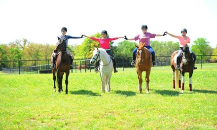 Two Horseback-Riding Lessons at The Paddocks Stables (48% Off)