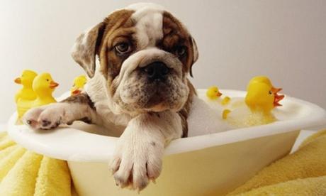 Peluquería canina con corte para perro de hasta 35Kg desde 14,95 € en Can Gat I Gos D Horta  Perruqueria Canina I Felina