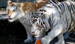 Zoo Safari Fauna Aventura: Entrada para 2, 3, 4 o 5 personas con opción a acceso a diferentes atracciones desde 10,90€ en Zoo Safari Fauna Aventura