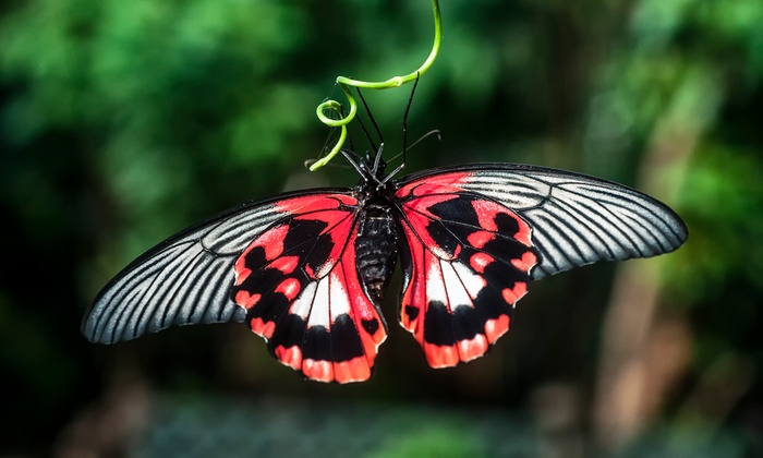 Victoria Butterfly Gardens - Up To 57% Off - Brentwood Bay, BC, CA ...