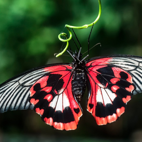 Victoria Butterfly Gardens Up To 55 Off Brentwood Bay Bc Ca