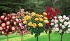 Lot de 3 ou 5 roses à mini-tiges