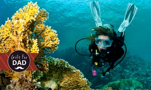 New Zealand Diving: Dive Charter with Gear Hire for One ($225) or Two People ($450) with New Zealand Diving, Auckland (Up to $650 Value)