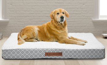 Wags and Whiskers Orthopedic Pet and Dog Bed