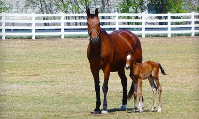 Wild Sunday Farm - Timberwood Park: $45 for Two 30-minute Horseback-Riding Lessons at Wild Sunday Farm ($100 Value)