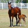 55% Off Horseback Riding Lessons