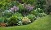 Forget Me Not Gardens - Orlando: Landscape Design for Front or Back Yard, or Both from Forget Me Not Gardens (Up to52% Off)