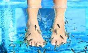 Néovita Institut: 30 minutes de fish spa pour 1 ou 2 personnes dès 15 € chez Néovita Institut
