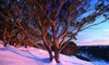 Mt Baw Baw: 1- or 2-Night Self-Catering Stay