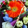Half Off at Garlands Florist