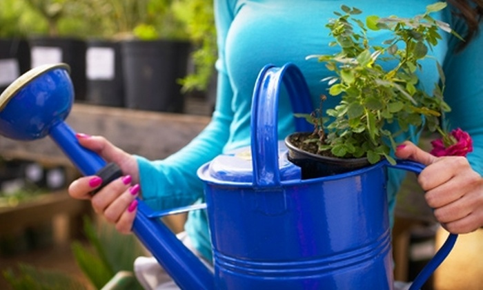 Sweet Pea Gift and Garden Shop - Knoxville: $12 for $25 Worth of Gifts, Plants, and Garden Supplies at Sweet Pea Gift and Garden Shop