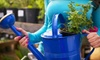 Sweet Pea - Knoxville: $12 for $25 Worth of Gifts, Plants, and Garden Supplies at Sweet Pea Gift and Garden Shop
