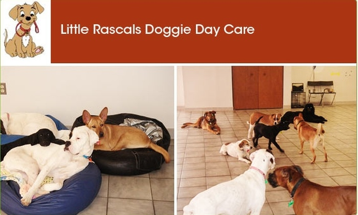 Little Rascals Doggie Day Care - Brightwood - Manor Park: Half Off at Little Rascals Doggie Day Care